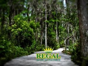regal-pest-control-news-post-florida-trees