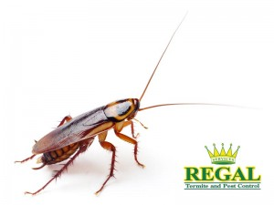 regal-pest-control-pests-library-cockroaches