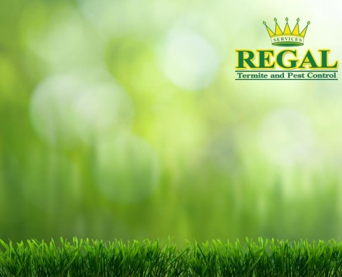 regal-pest-control-pests-news-landscaping